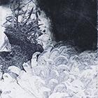 Chrysantheme blau, 2015, Mezzotinto, Fototiefdruck, 13.7 x 6 cm (Plattengrösse)