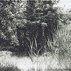 Garten, 2012, Fototiefdruck, 11 x 19 cm (Plattengrösse)