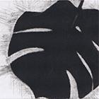 Monstera, 2014, Mezzotinto, 9 x 14.5 cm (Plattengrösse)