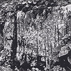 Flechten, 2015, Fototiefdruck, 14 x 19.5 cm (Plattengrösse)